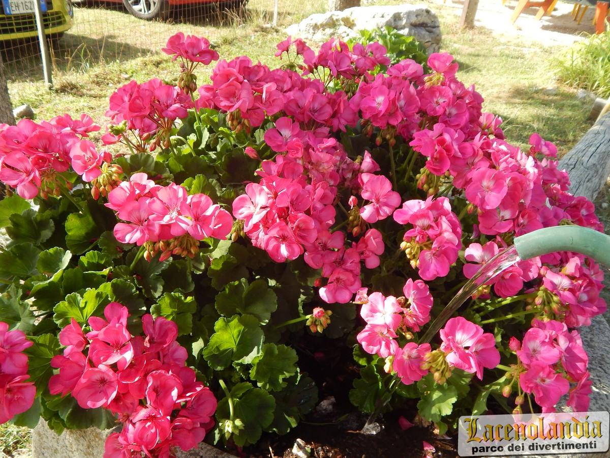 Fiori Bagnoli Irpino : Fiori e piante lacenolandia è anche questo! parco giochi