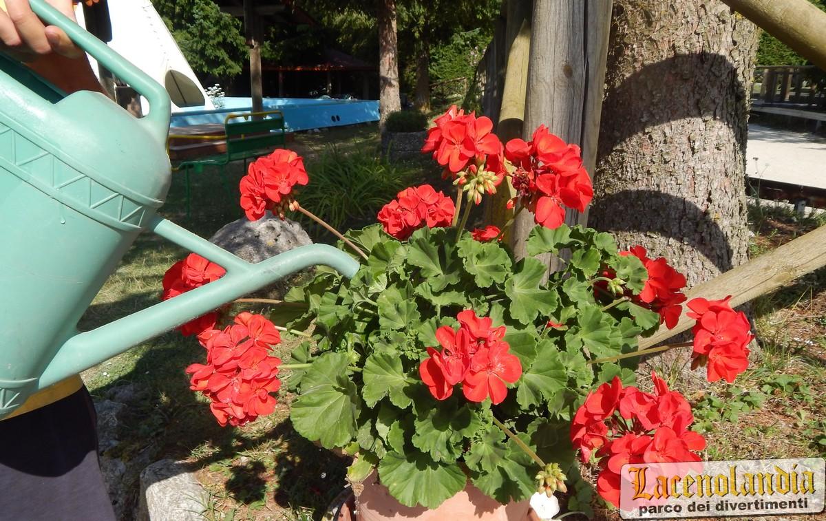 Fiori Bagnoli Irpino : Pizza pancetta mozzarella e fiori di zucca picture of un posto